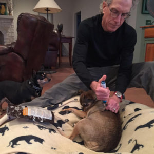 Needle free insulin for dogs